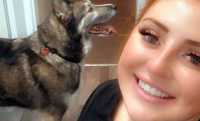 Студентка пришла с выпускного, а утром обнаружила в комнате собаку, похожую на волка Культура