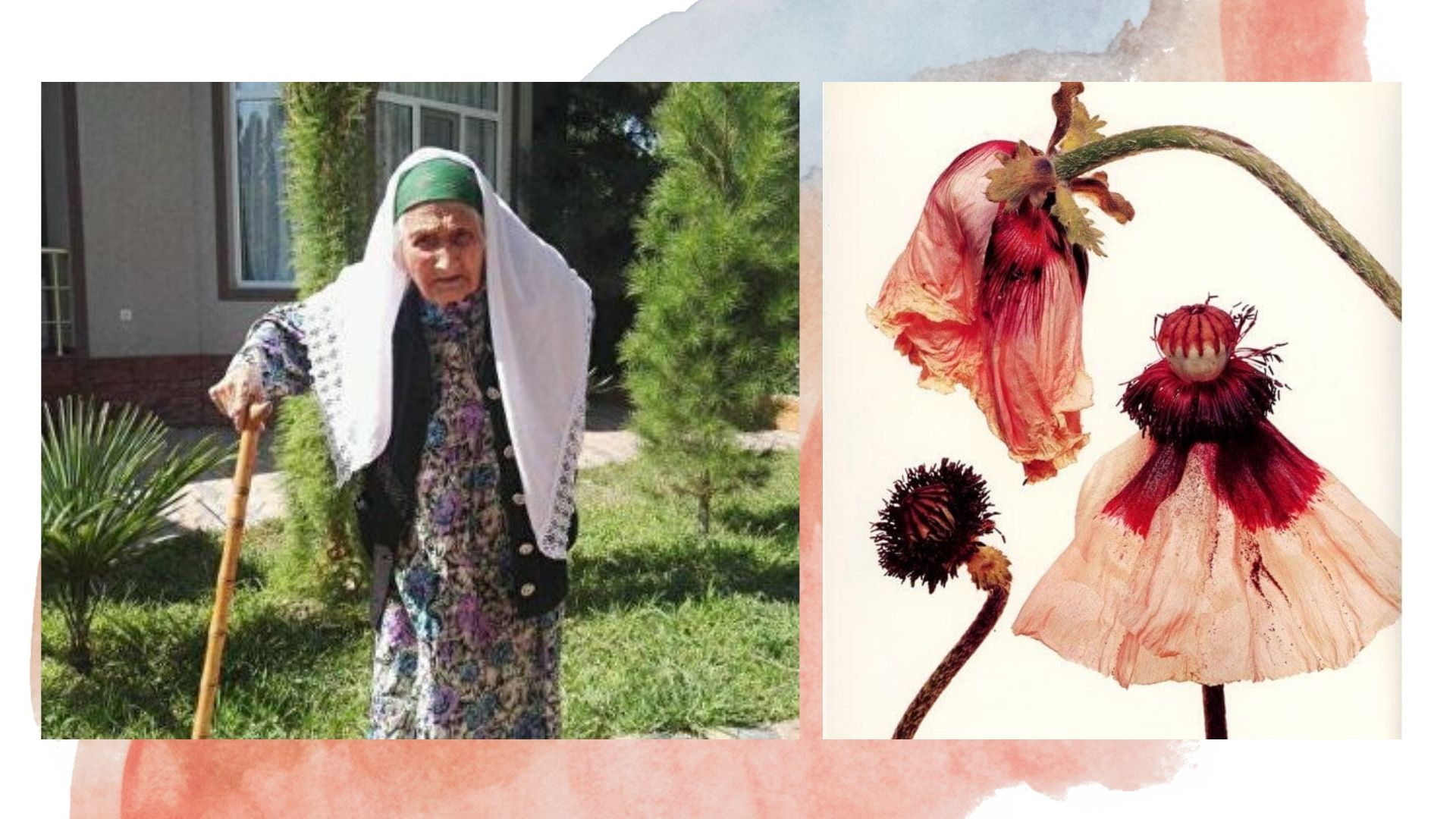 Старейшая женщина на Земле скончалась в 127 лет: как она жила долгожители,жизнь,интересное