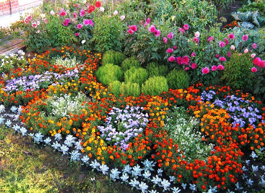 Цветы на клумбе – правильное соседство