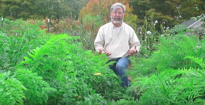 Как посадить морковь -по-американски-, которая точно вырастет при любых условиях!