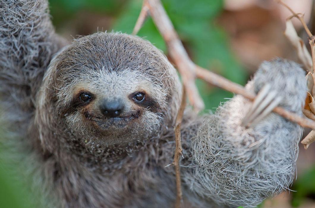 то, картинки маленьких ленивцев фотоконкурса