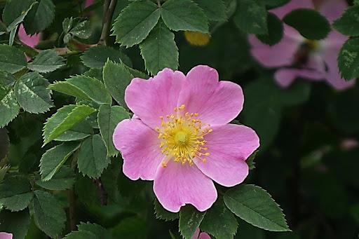 Идеальные цветы для сада, которым не нужен полив