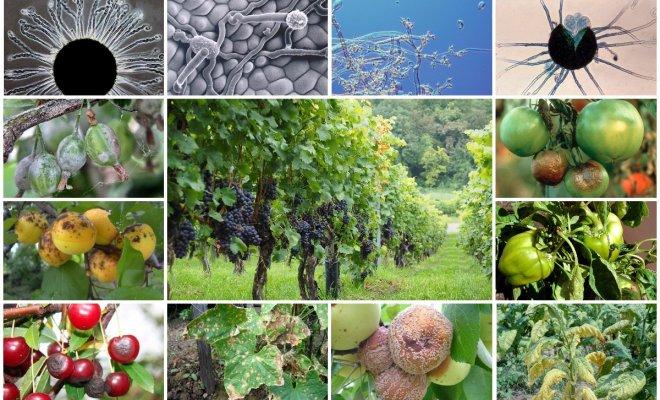 """Как защитить сад, огород и цветник от болезней без """"химии"""""""