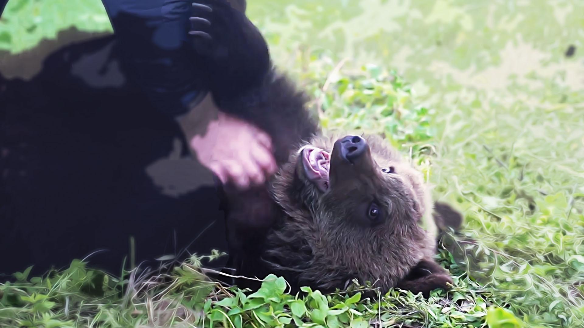 Брошенного хозяевами медвежонка спас житель Карачаево-Черкесии Общество