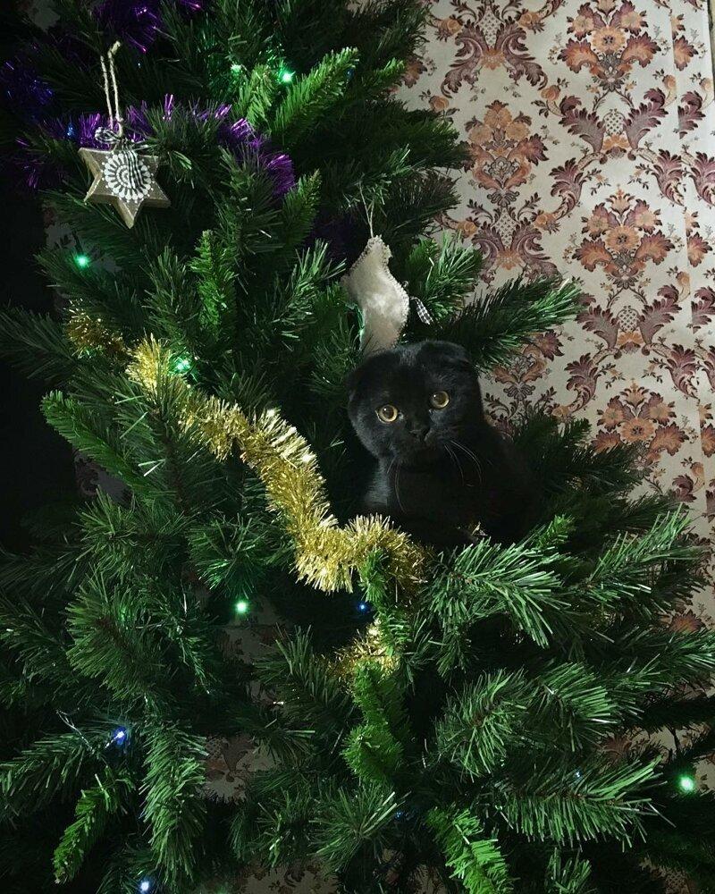 Каждый-каждый Новый год кот, конечно, ёлку ждёт елка, игрушки, кот, новый год, разбой