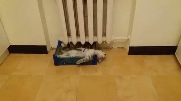 Котейка расслабляется