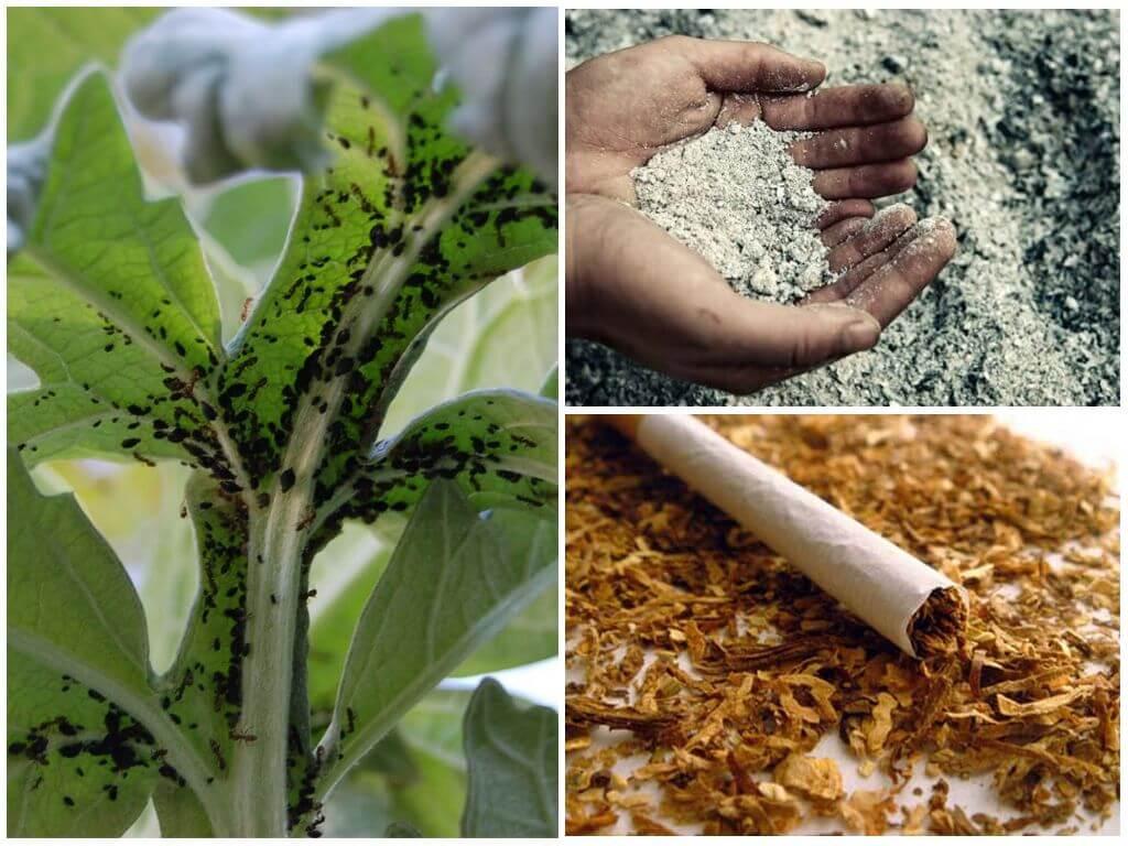 Табак против тли и белокрылки