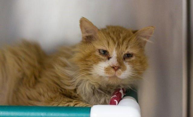 Cотрудники приюта отказались усыплять кота и обратились в SPCA с просьбой найти ему новый дом в мире, домашний питомец, животные, история, кот, семья