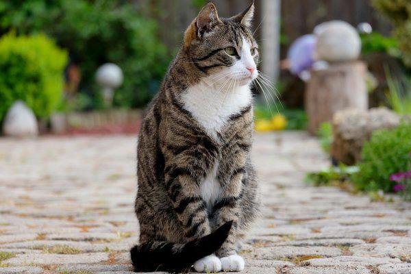 Язык кошек: переводчик с кошачьего домашние животные