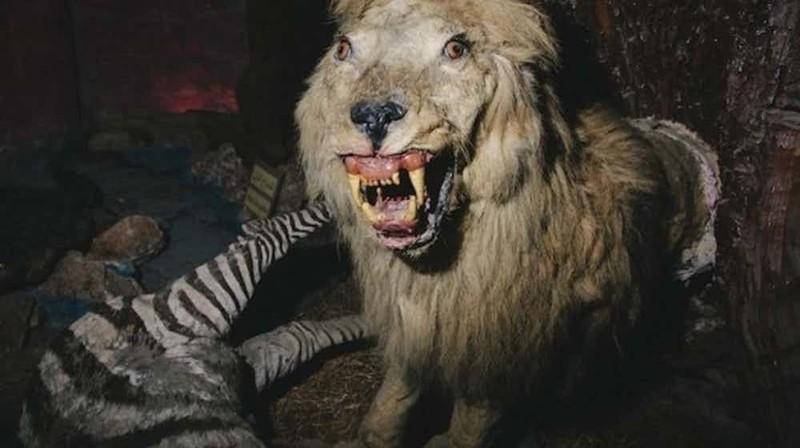 """""""Посмертный зоопарк"""" в секторе Газы страшные места, страшные места на земле, страшные места на земле фото"""