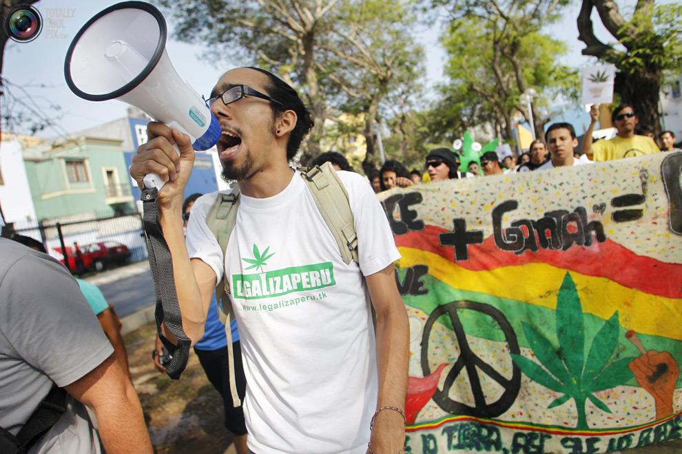 Марш марихуана можно ли хомяку коноплю