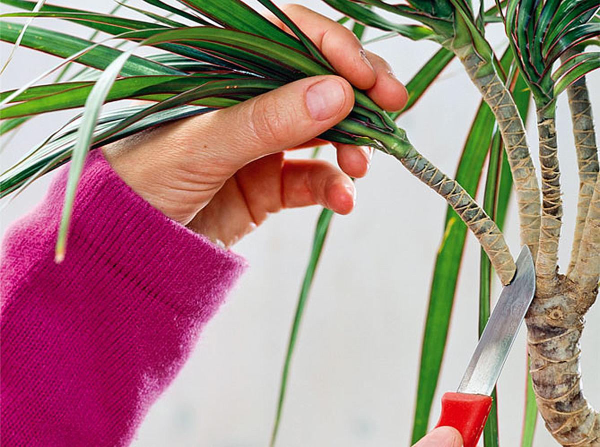 Необычный способ укоренения растений. Работает на 100%