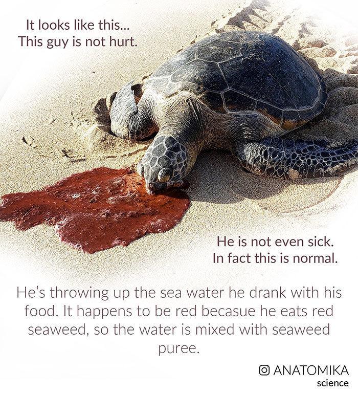 Зачем морским черепахам такие жутки пасти