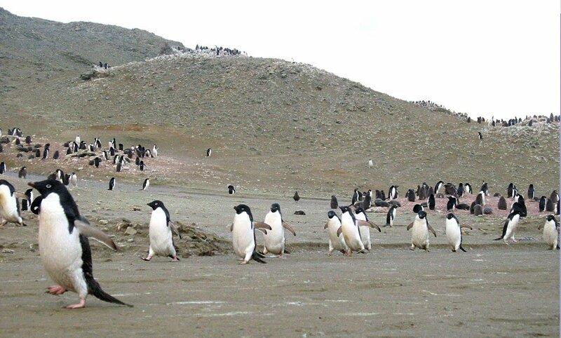 В Антарктиде установлен новый рекорд тепла