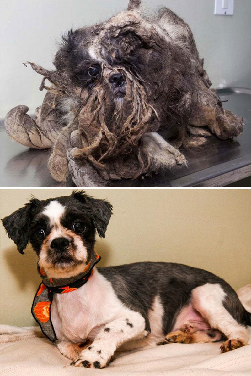 Фото собак до и после