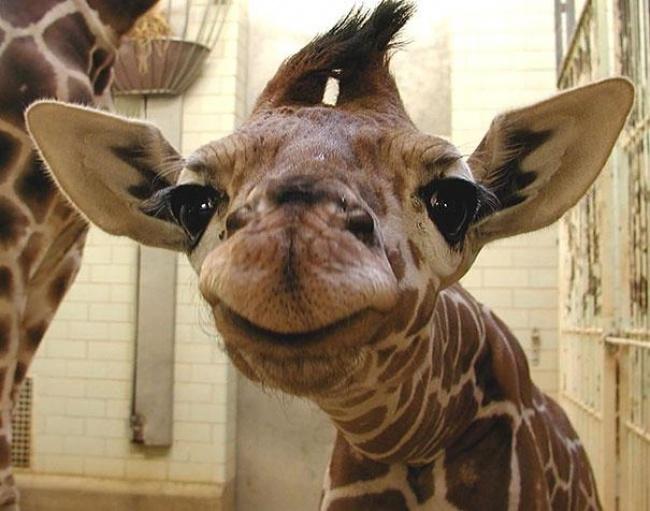Радуйтесь жизни и жизнь улыбнется в ответ животные,позитив,природа,улыбки