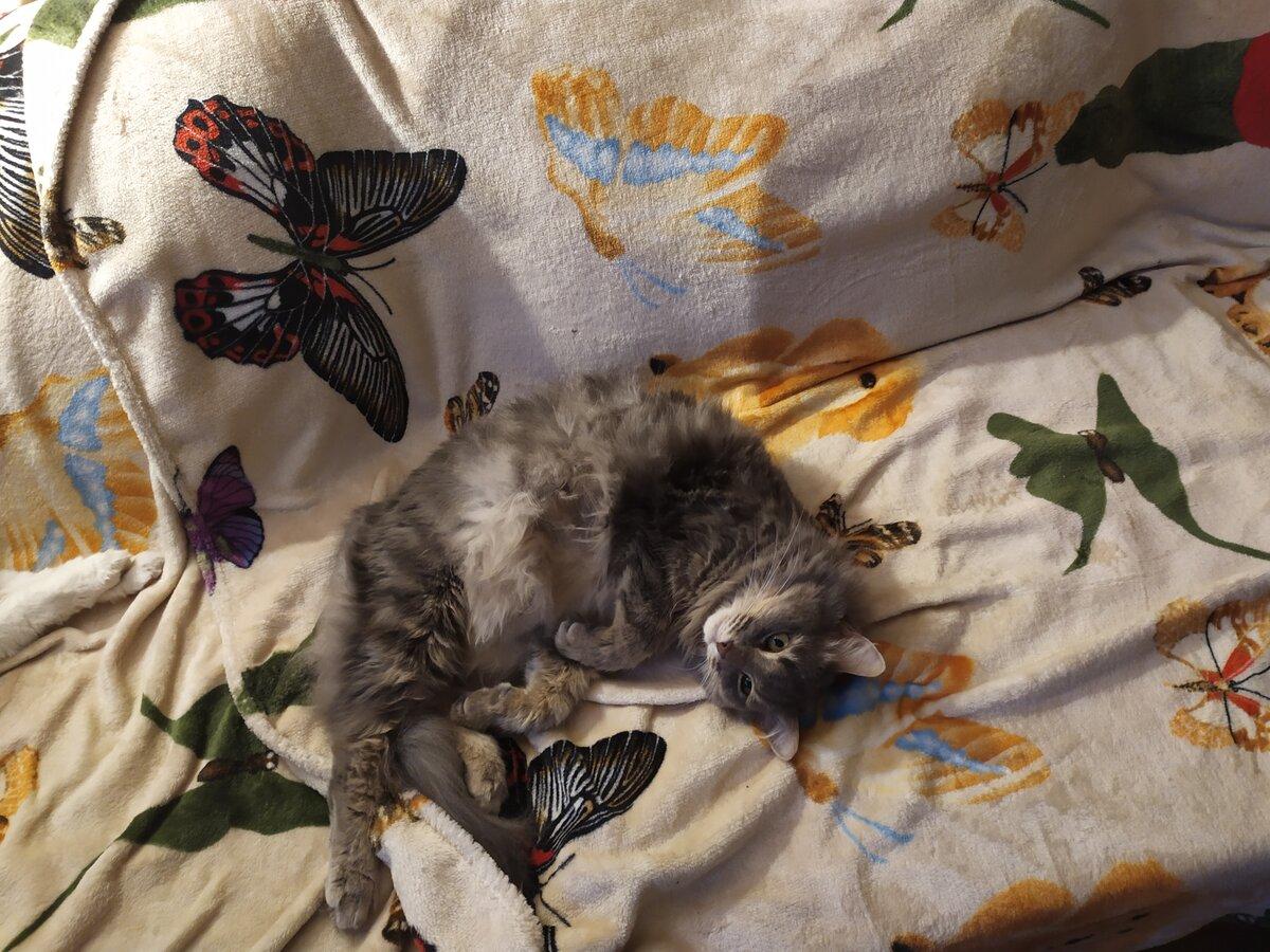 Осторожнее, котик, а то муху проглотишь! Сонные зевающие коты  супер