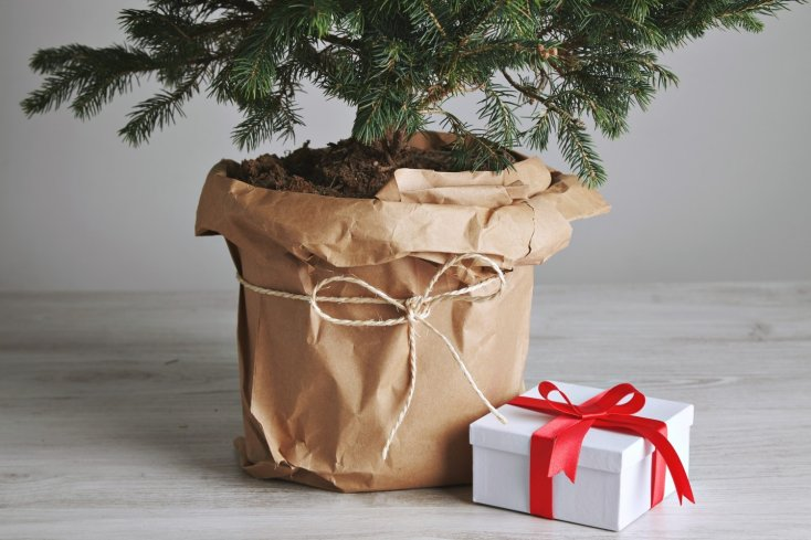 Что делать с новогодней ёлкой? Можно съесть, и не только новогодняя елка