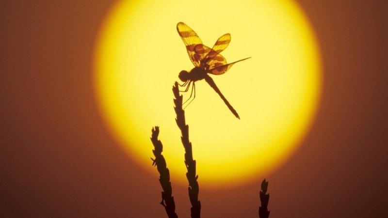 Все. букашки, красивые, насекомые, природа