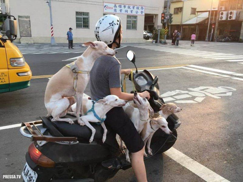 Забавные фотографии из Азии