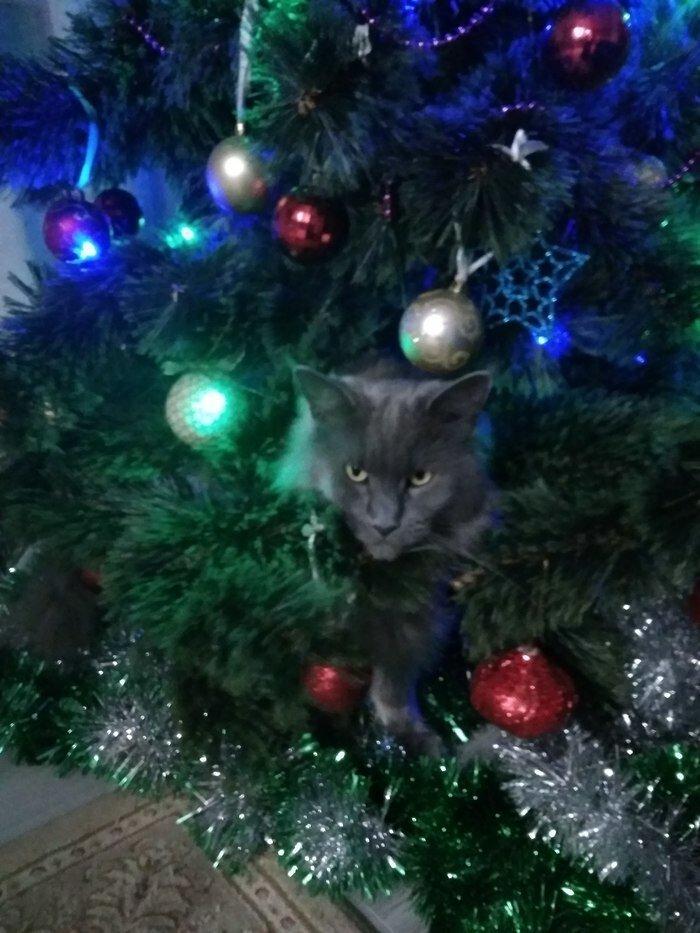 Притаился елка, игрушки, кот, новый год, разбой