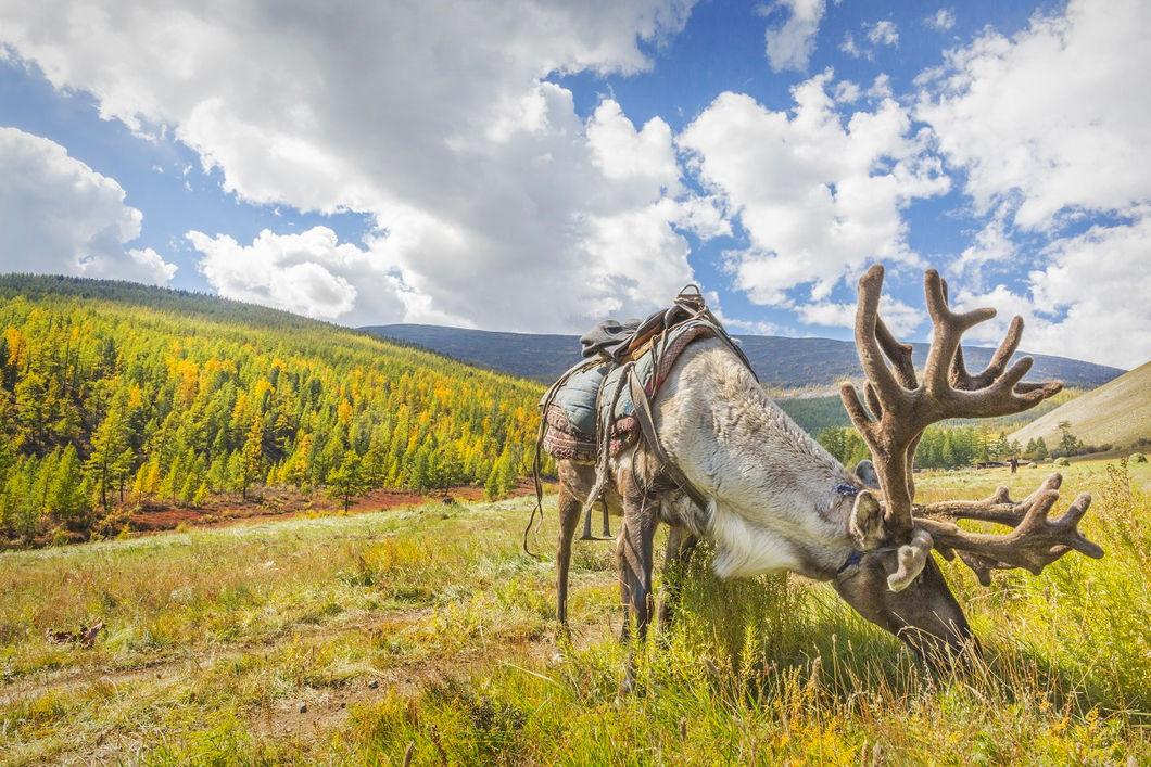 Монголия: обратная сторона цивилизации