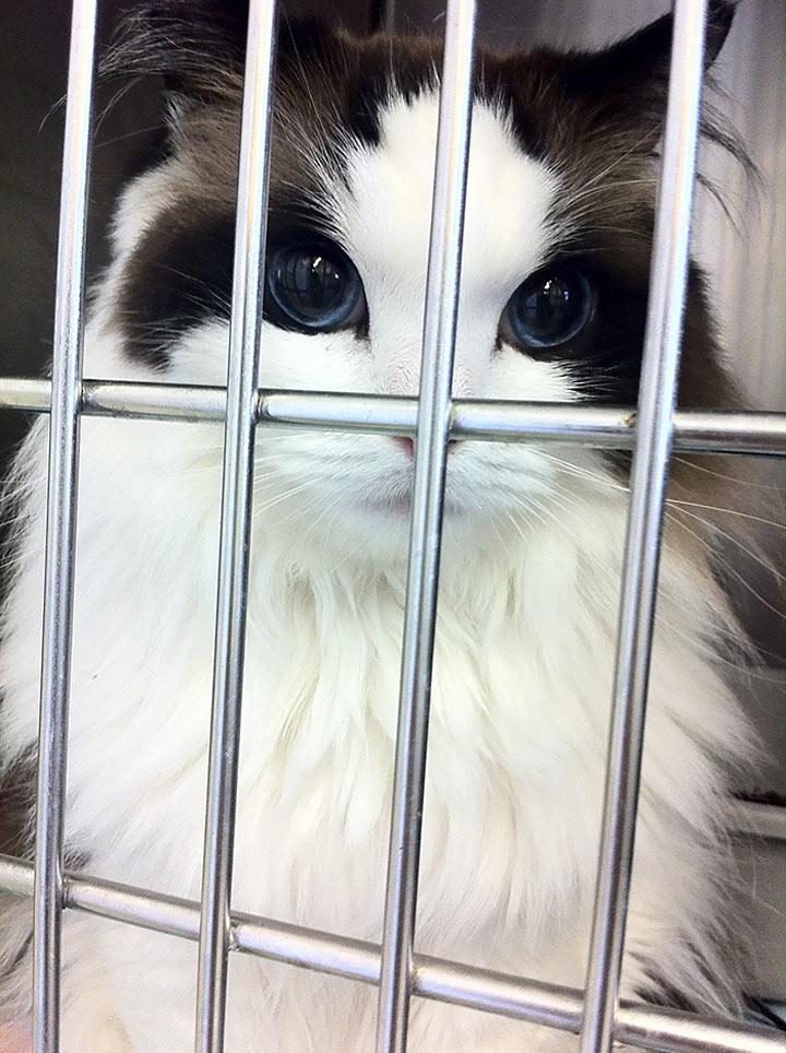 20 самых красивых котов в мире, вы просто обязаны их увидеть