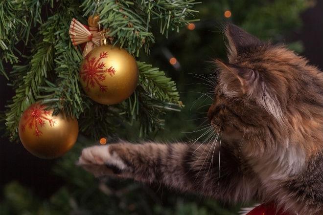 Американцы придумали елку для владельцев кошек