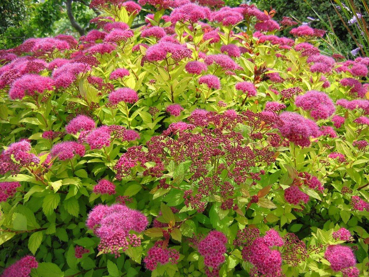 Какие садовые растения устойчивы к морозу? дача,ладшафтный дизайн,растения,сад и огород