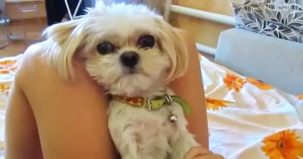 «Боня, твою котлету съели»: щенок вне себя от ярости!