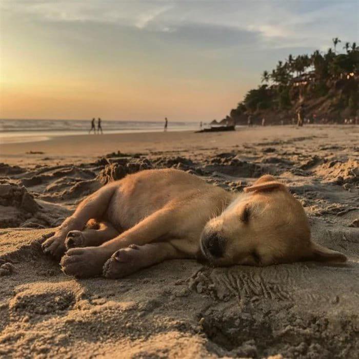 Раненный щенок бродил по улицам и просил о помощи, но теперь он путешествует по всему миру