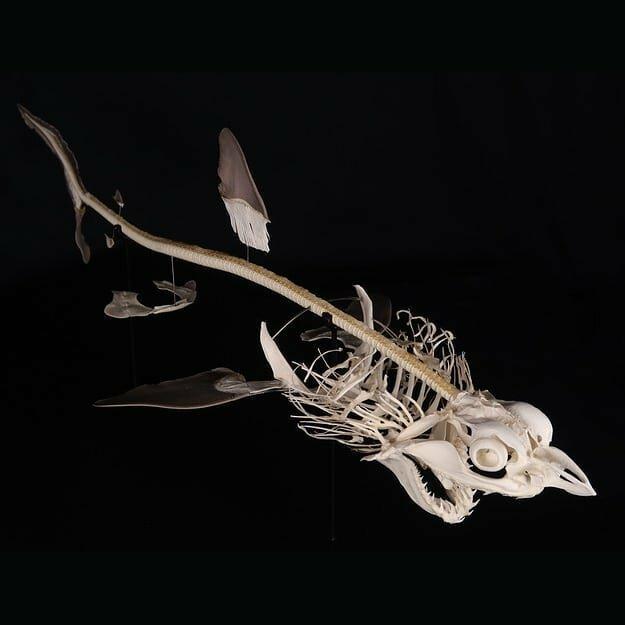 Французские учёные показывают, как выглядят скелеты разных живых существ