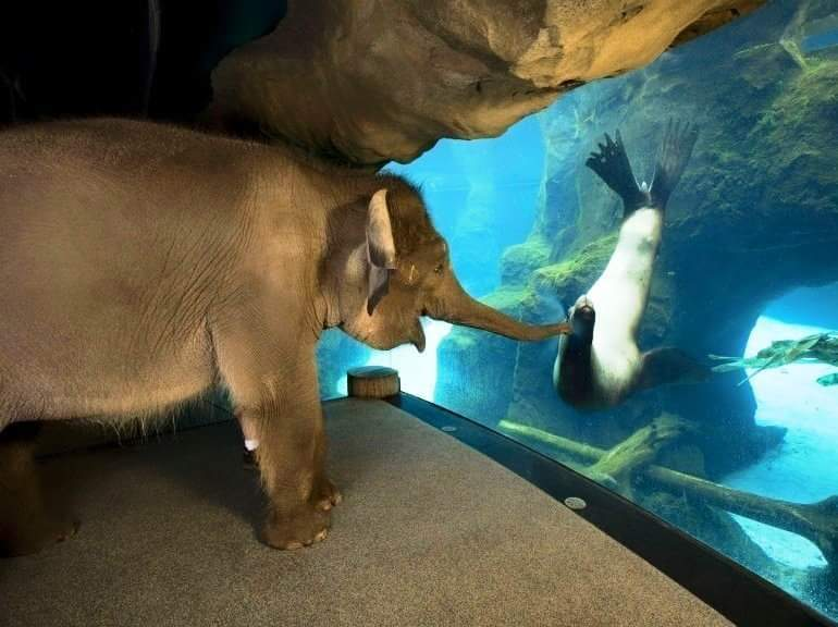 """""""The Oregon Zoo staff took the elephant around the zoo, she liked sea lions the best!"""""""