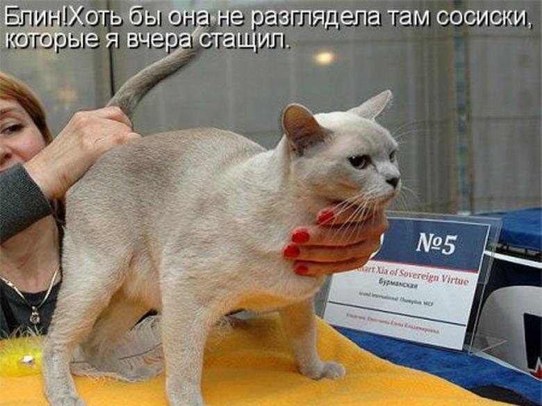 ветеринарный юмор картинки седьмой