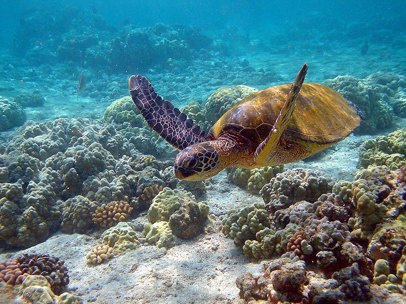 10 странных и пугающих фактов, связанных с глубинами океана