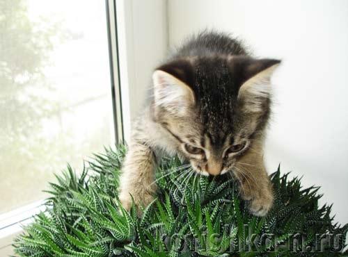 Как воспитать кошку, ту самую, которая гуляет сама по себе?