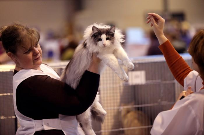 Главная выставка кошек в Вел…