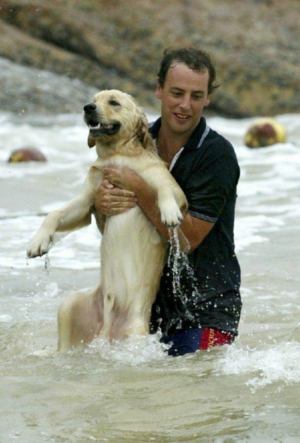 А этот пес чуть не утонул во время тайфуна Дуджуан в Гонконге, но его спас парень добро, доброта, животные, люди, поступок, спасение, человечность