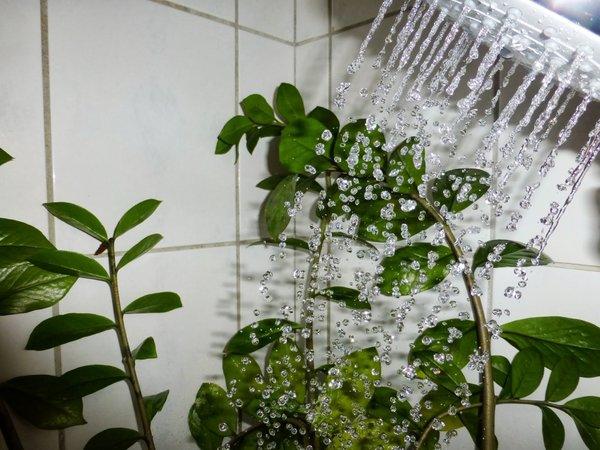 Горячий душ преображает комн…