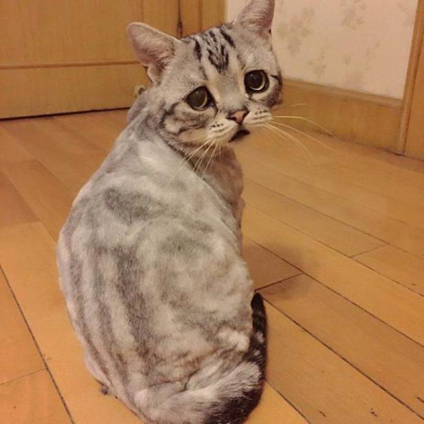 Котики и собачки способные н…