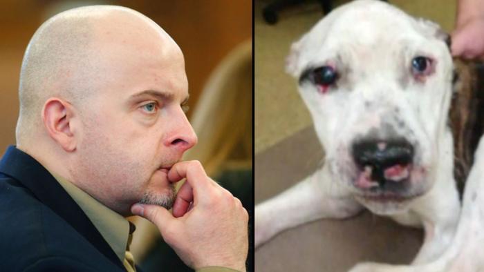 Историческое решение Суда. Он избил собаку так, что пса пришлось усыпить… За это его приговорили к сроку — 10 лет тюрьмы!