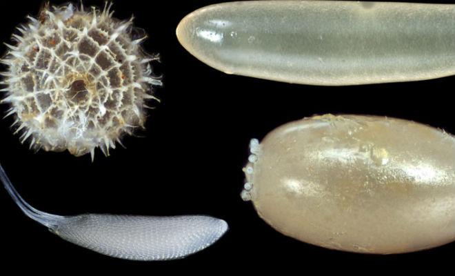 Все яйца птиц примерно одинаковы, но яйца насекомых показывают настоящее безумие природы животные,насекомые,наука,Природа,Пространство,яйца