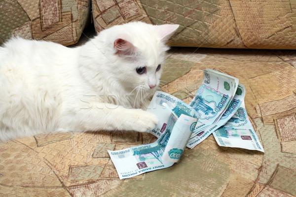 Деньги и Животные - Когда Кот бухгалтер, а Собака фин директор