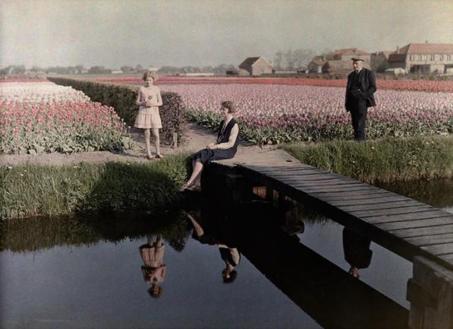 Местные жители отдыхают на тюльпанном поле вдоль канала в Харлеме, Нидерланды, 1931 national geographic, неопубликованное, фото