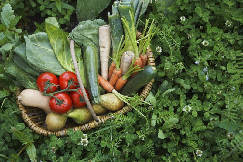 Эко, органик, био: что означает маркировка на органических продуктах. Изображение номер 4