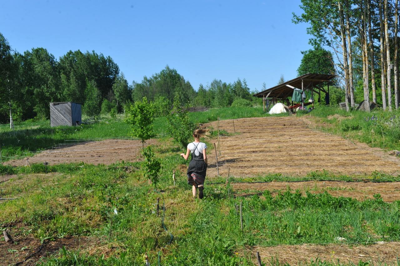Сербский аспирант придумал, как управлять поливом сада через SMS