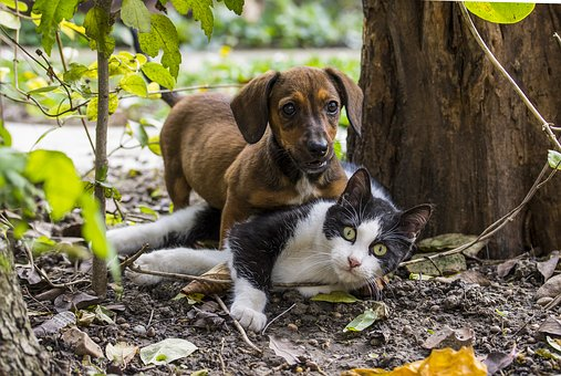 Мир животных у Михалыча!