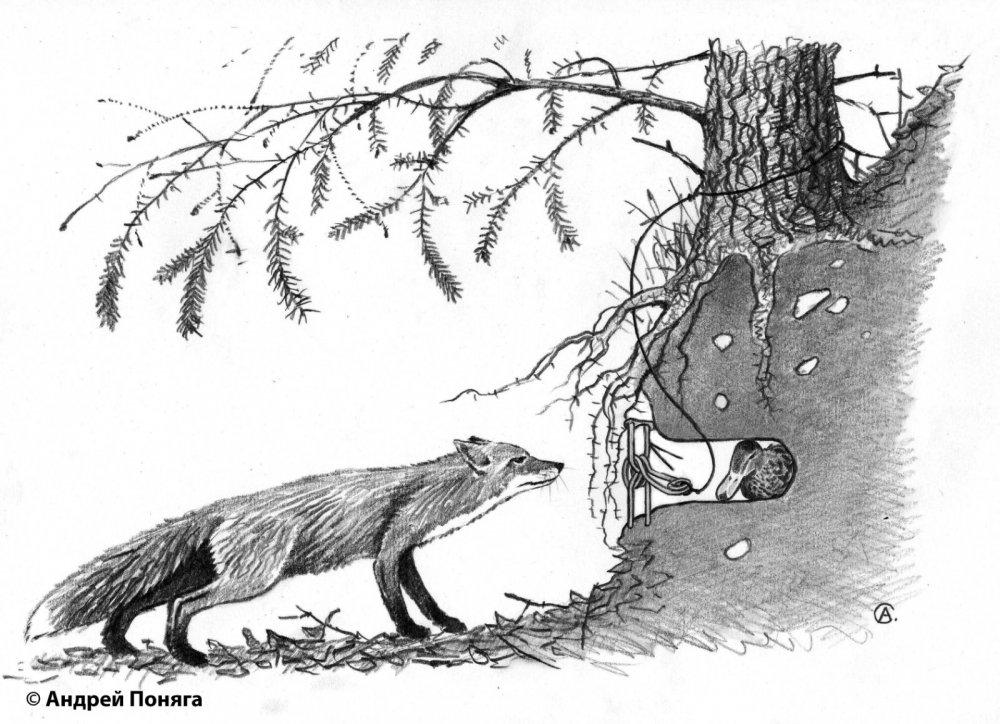 ловушка на лису своими в картинках