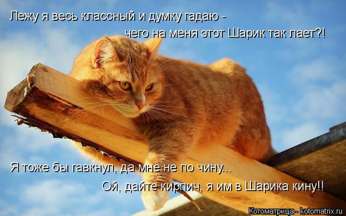 Котодром - 30 от Михалыча!