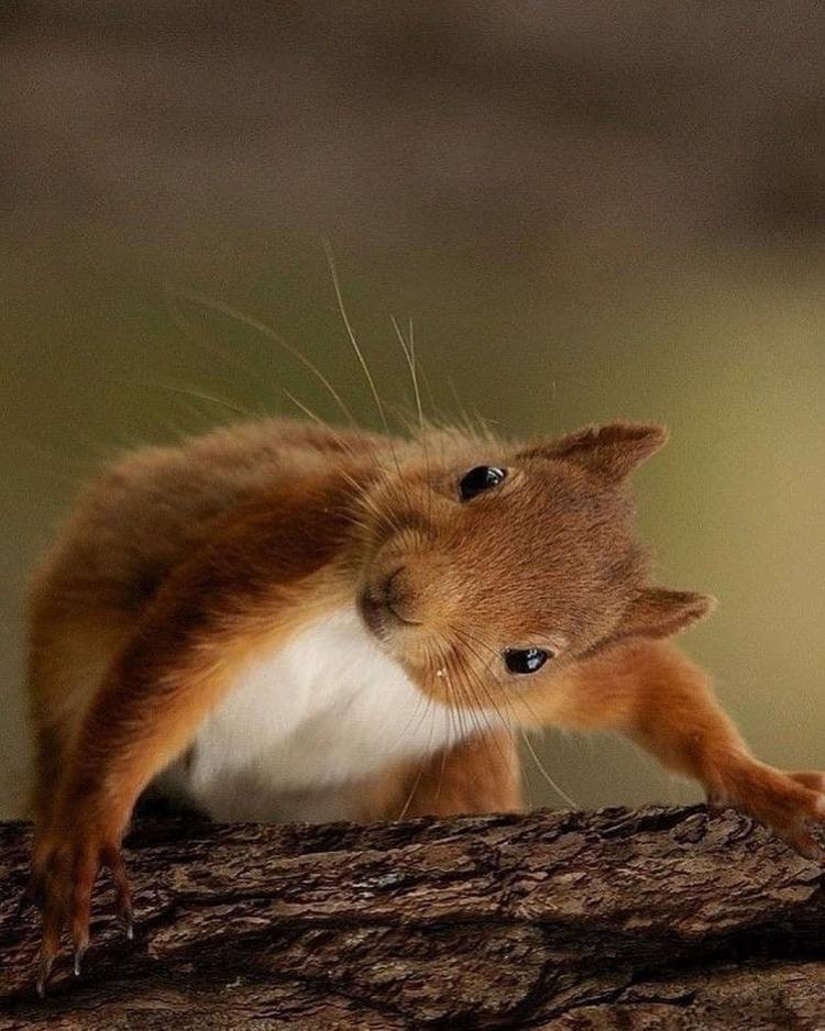 организациях ип, животные в природе смешные картинки этой